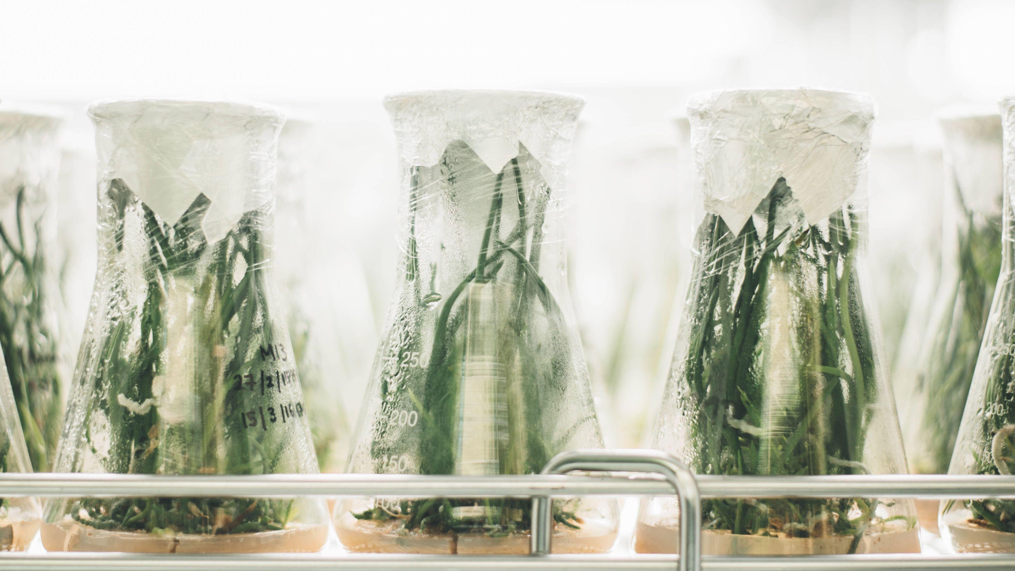 Workshop – Pflanzenstammzellen mit DIY-Methoden selber züchten